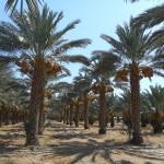 Southern California Planting Tree