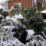 IMGP5326.jpg snow