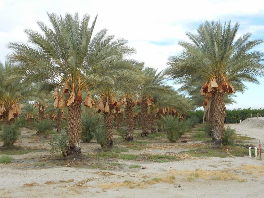Palm Springs A To Solana Beach Ca