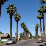 desert landscaping tips