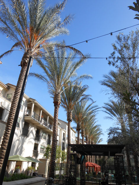 spring landscaping service california
