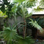 west coast trees family and entertaining friendly landscaping