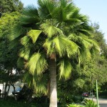 west coast trees home landscaping