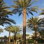 california strip mall landscape west coast trees