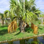 water-conservation-tips-west-coast-trees