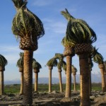 Los-Angeles-Palm-Trees-Phoenix-Canariensis