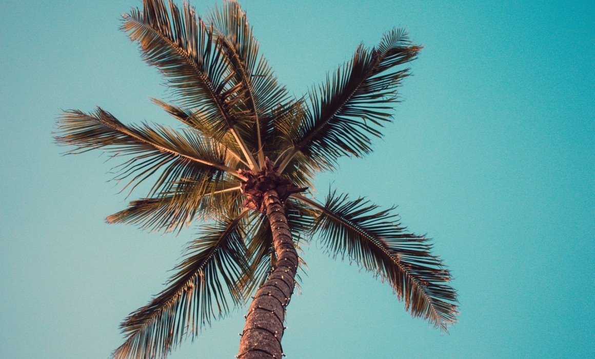 3 Steps to Caring for Your Palm Trees in California