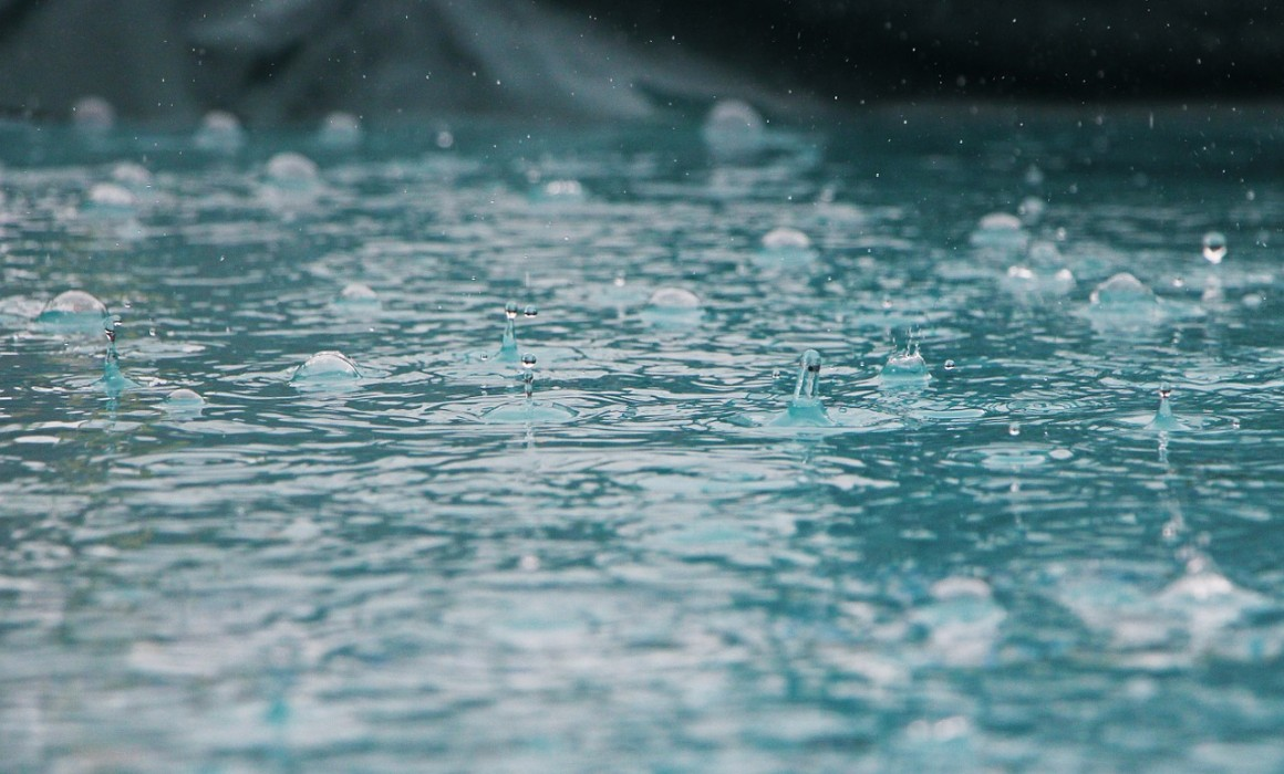 Harvesting Rainwater for Your California Fan Palm Trees