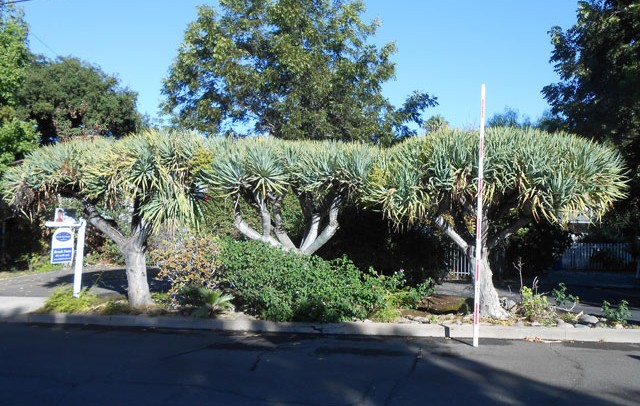 tree landscaping service california