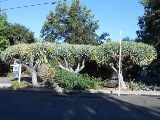 tree landscaping service california