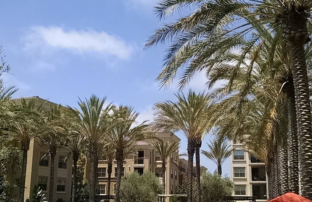 west coast trees hotel landscaping tips