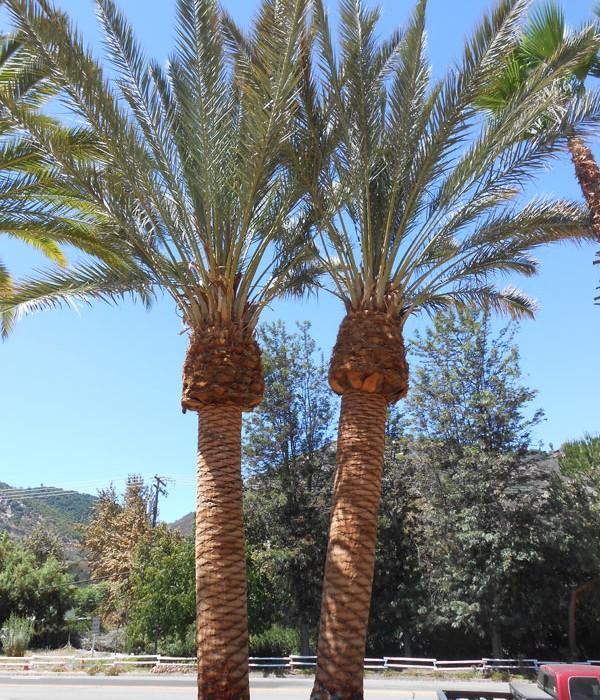 community-landscaping-west-coast-trees