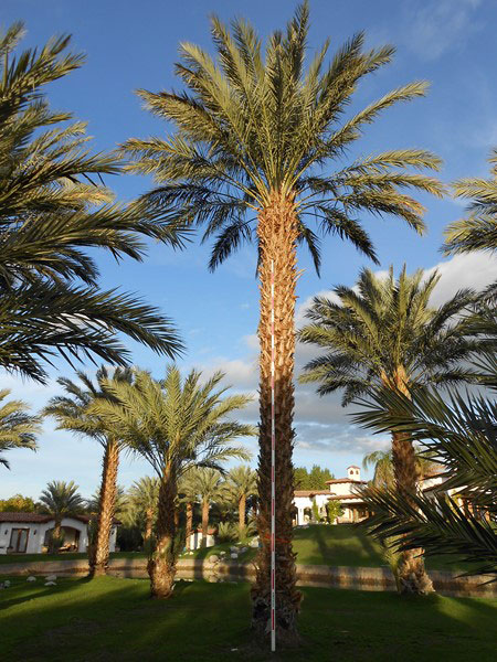 california strip mall landscape west coast trees